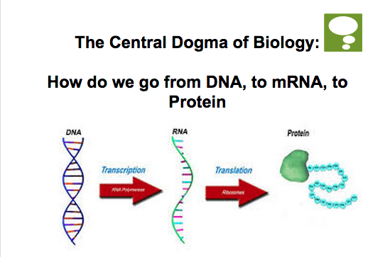DNA and Protein Synthesis - Mr  Smit: Life Sciences For SHS